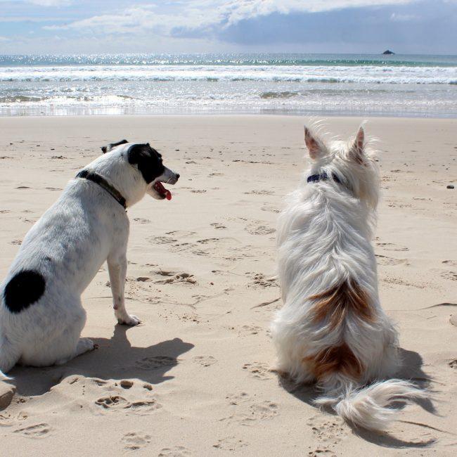 De hond mee op vakantie.. mag hij het land wel in en welke eisen gelden er?