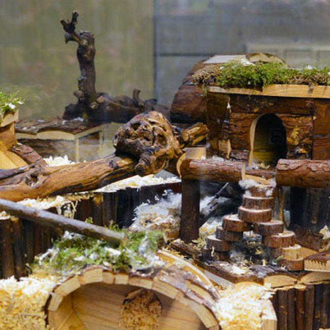 Nieuw in Nederland…..hamsterscaping