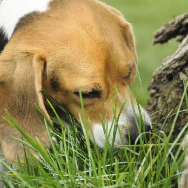 Bah mijn hond eet poep!