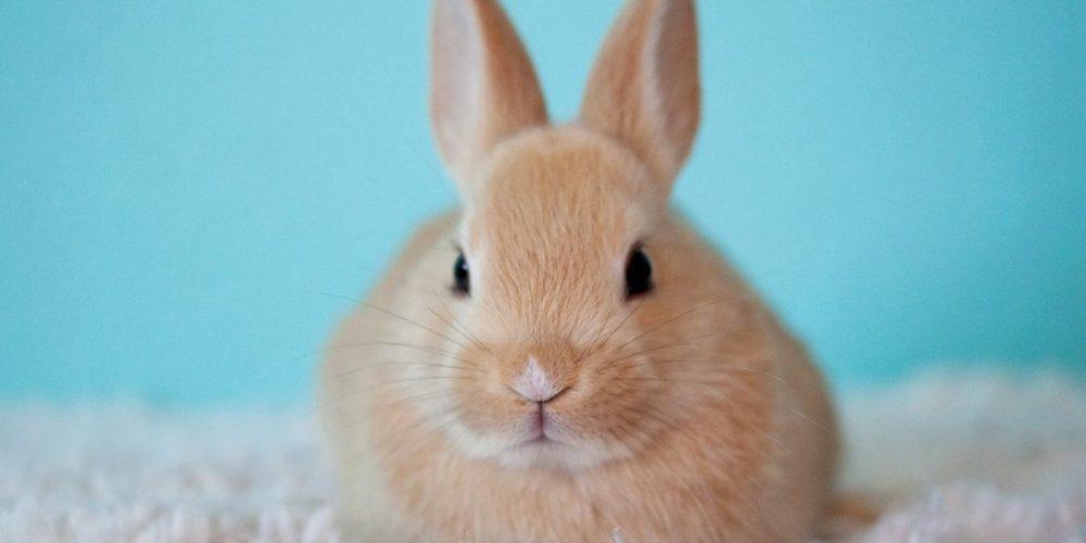 Help….mijn konijn bijt!!