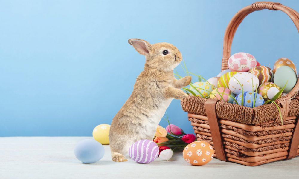 Eieren, eieren en nog eens eieren..