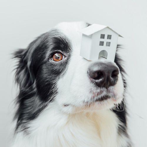 Zo leer je een hond alleen thuis te blijven