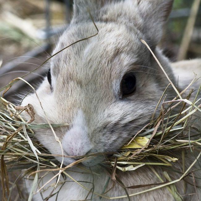 Gebitsproblemen bij konijnen