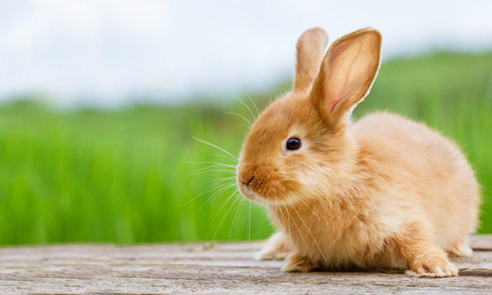 Warm weer en konijnen, geen goede combinatie..