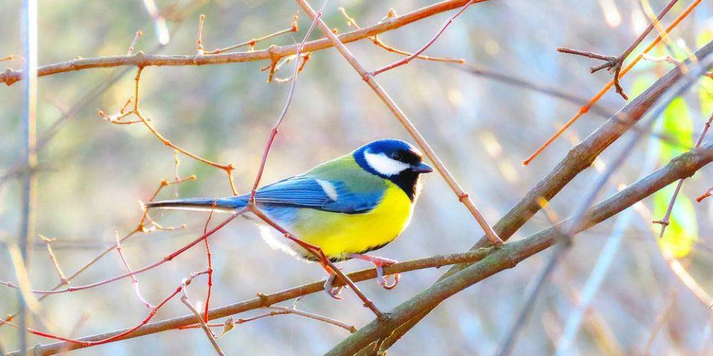 Denk tijdens de koude maanden aan de buitenvogels