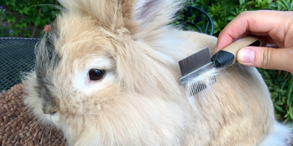Haarballen bij konijnen