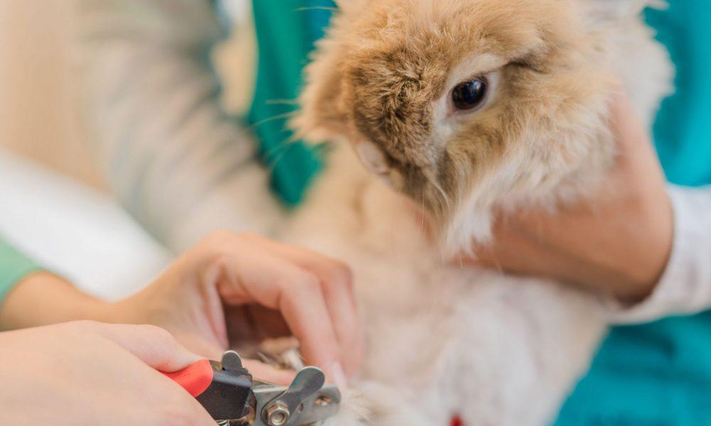Pedicure voor konijnen..