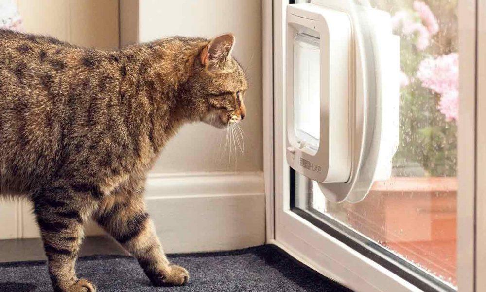 Het kattenluikje en de kat