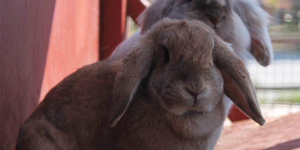 Hondenweer voor konijnen