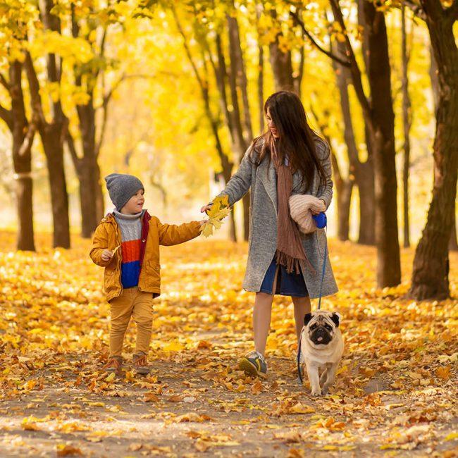 Let goed op bij een (bos)wandeling in de herfst