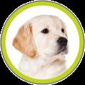 honden-e1442957937735.png
