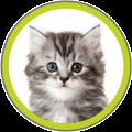katten-e1442957855106.png