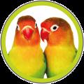 vogels-e1442957925816.png